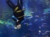 List Of Hobbies Scuba Diving